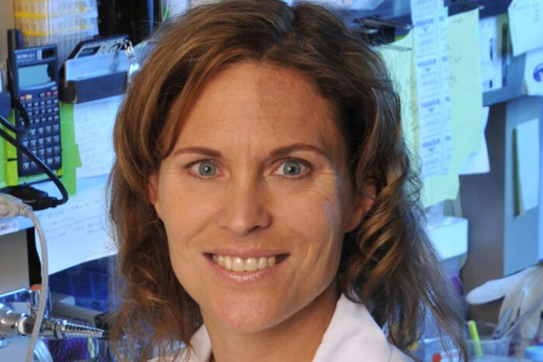 Cell Biology & Physiology names Stewart vice chair